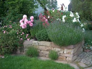 Gartengestaltung Heike Stey Pflanzen